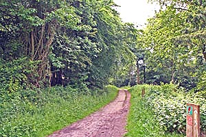 Photo of a footpath at Queen Elizabeth Country Park.